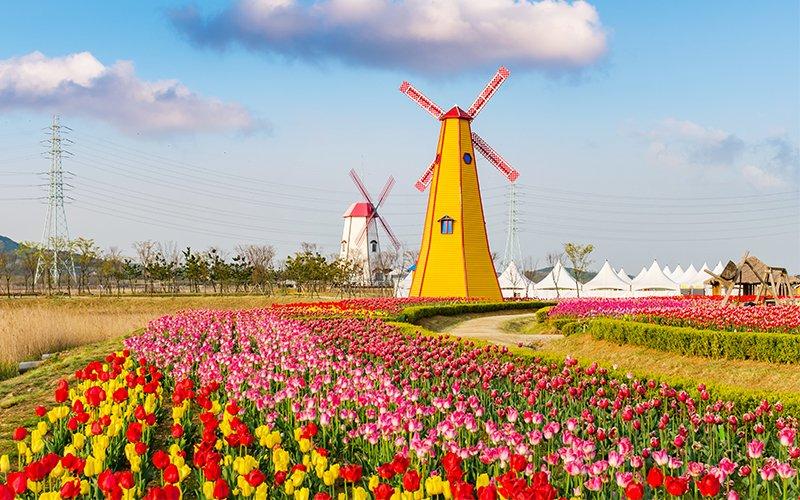 festival-des-tulipes-aux-pays-bas-un-evenement-incontournable